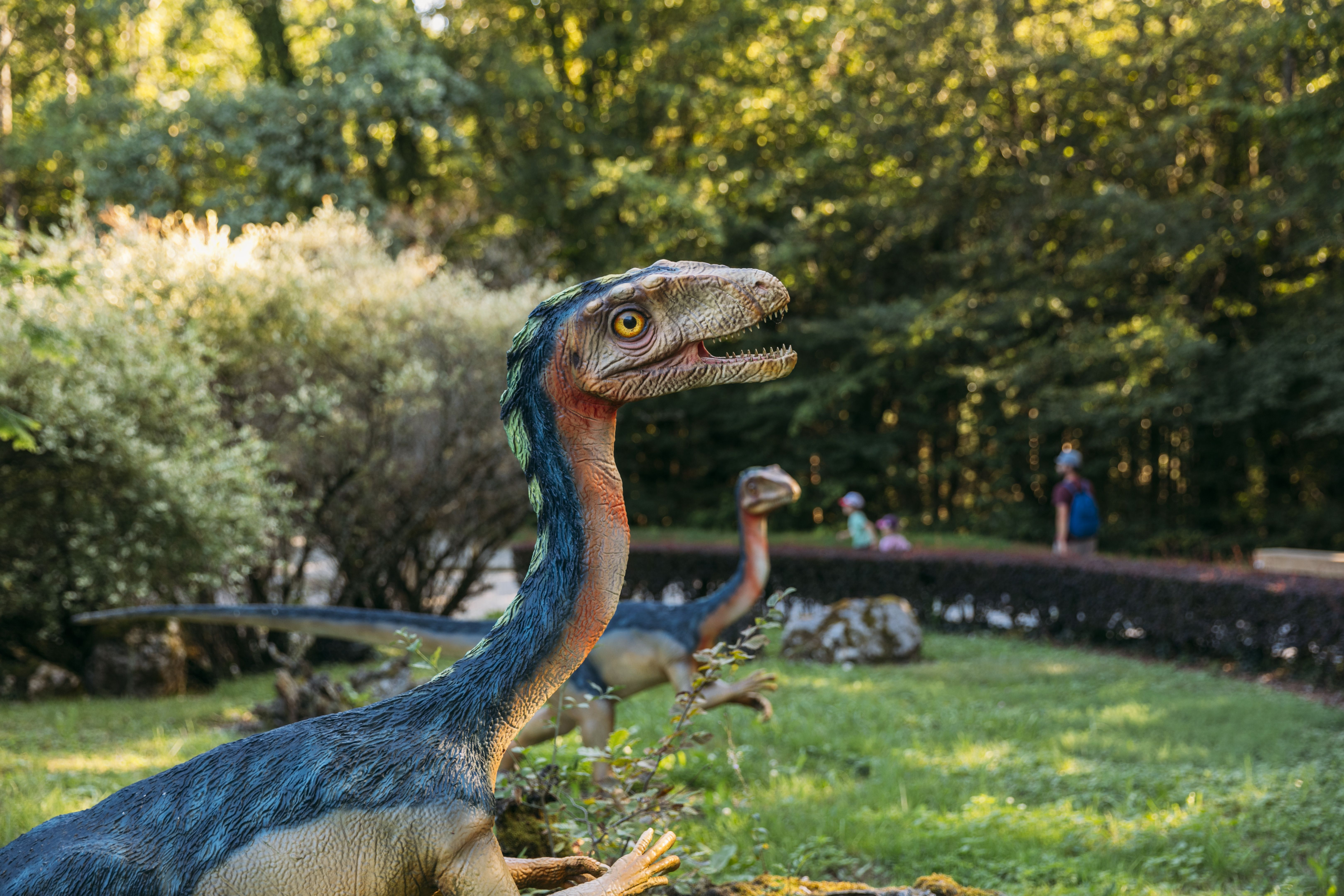 parcours dinosaure - parc dino-zoo